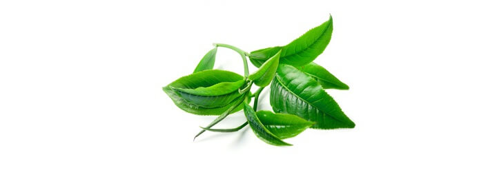 Huile essentielle d'arbre à thé ( huile essentielle de tea tree) bio