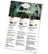 Les différentes huiles essentielles d'eucalyptus