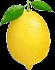Huile essentielle de Citron (Citrus limon)