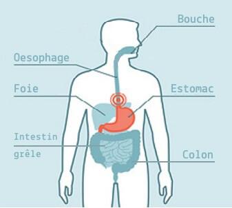 Les huiles essentielles pour la digestion